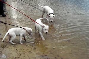 Schwimmen geht es doch auch noch, oder?